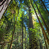Armstrong Redwoods-0450_1_2_3_4_HDR