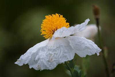 Botanical Gardens-0906