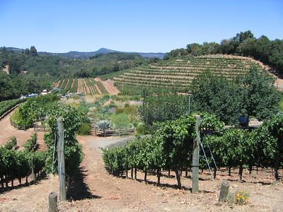 Sonoma Valley 023