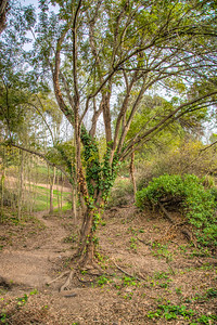 Canyon Park-5478_79_80_81_82_HDR