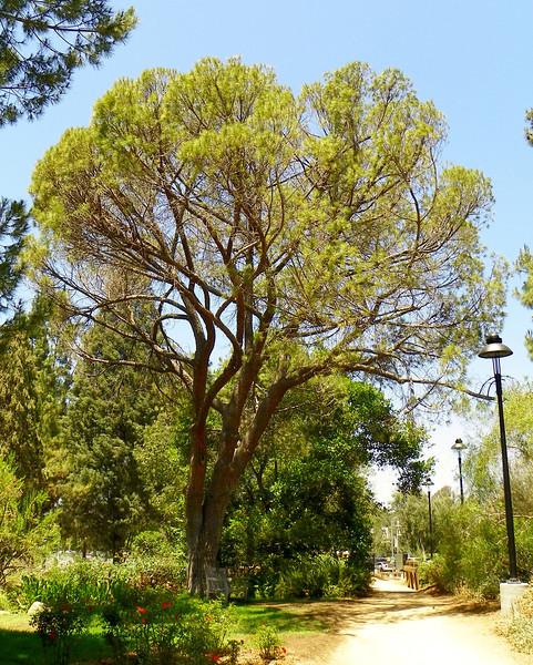 Arboretum -53