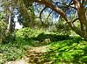 Arboretum -9