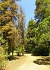 Arboretum -47