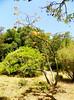Arboretum -44