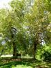 Arboretum -11