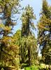 Arboretum -48