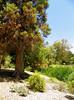 Arboretum -50