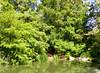 Arboretum -12