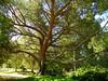 Arboretum -8