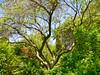 Arboretum -41