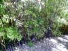 Arboretum -55