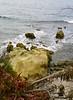 Huge shore rock