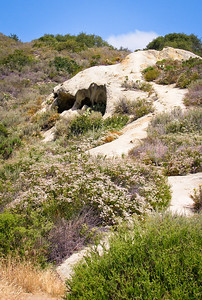 Aliso & Wood Canyons Park--Laguna Beach, California