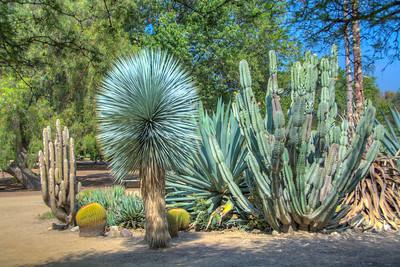 Fullerton Arboretum-7580_1_2_3_4_HDR