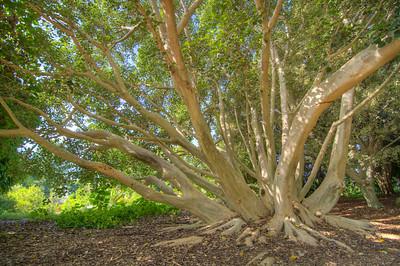 Fullerton Arboretum-7523_4_5_6_7_HDR