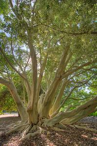 Fullerton Arboreturm-7528_29_30_31_32_HDR