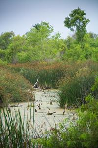Shipley Nature Center-0364
