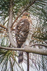 Shipley Nature Center-0494