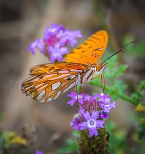 Shipley Nature Center-0383