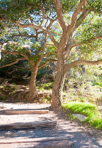 Holy Jim Trail Feb11-6483