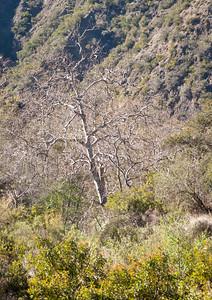 Holy Jim Trail Feb11-6607
