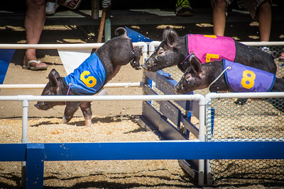 Orange County Fair-0697