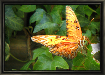 IMG_3838_2242_butterfly