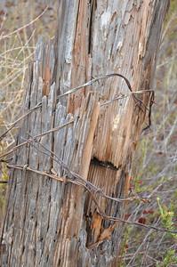Peters Canon Regional Park_5302