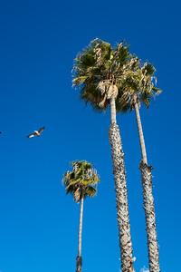 San Clemente-7209