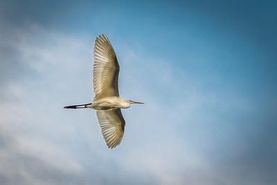San Joaquin Wildlife Sanctuary-4508