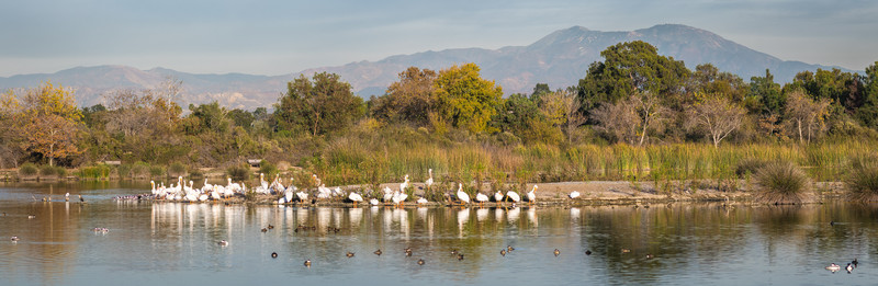 San Joaquin Wildlife Sanctuary-4440-Pano