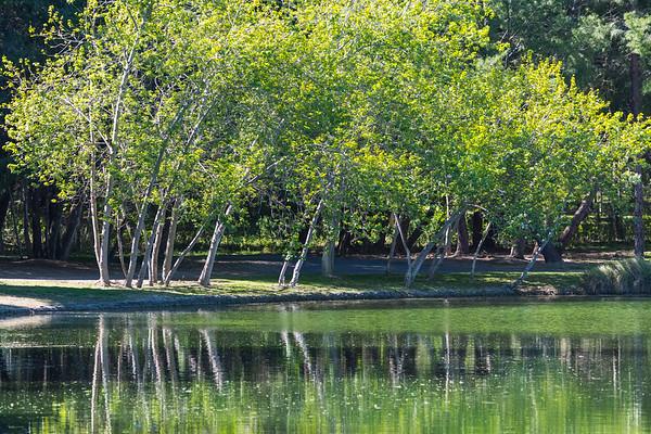 Yorba Linda Regional Park-8283