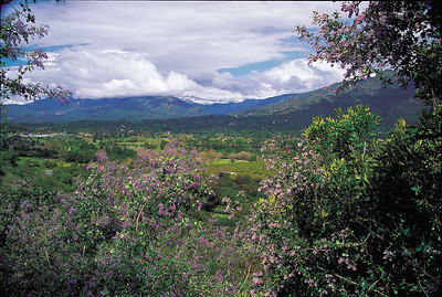 Ceanothis frames the Ojai Valley following early spring storm