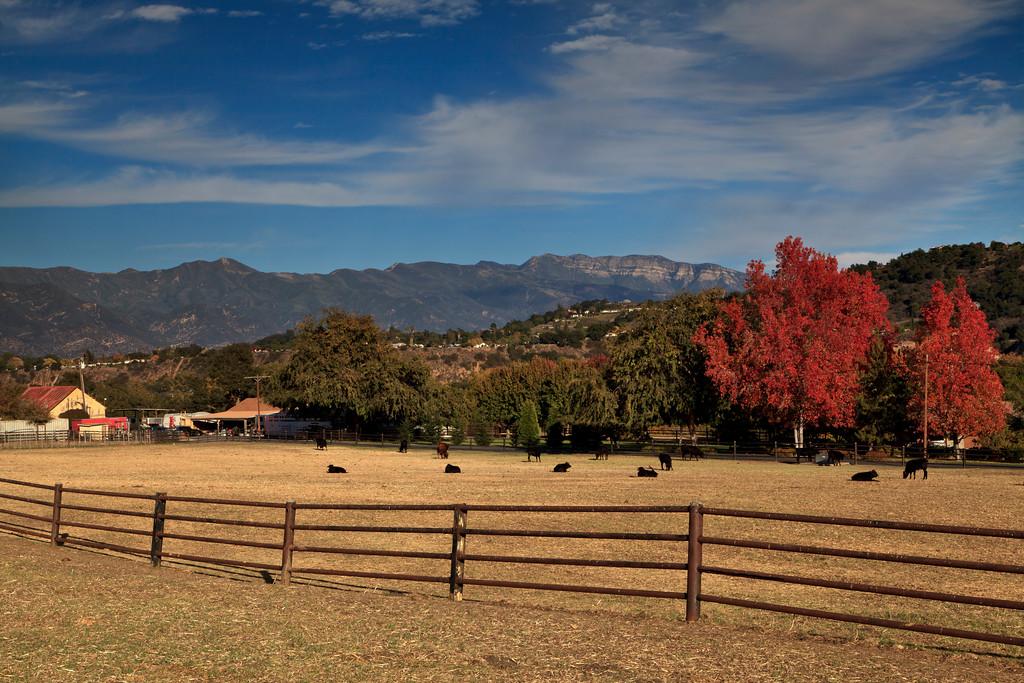 November - Ranch near Lake Casitas.