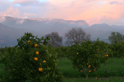 Oranges and snowy pink  moment