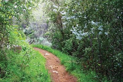 Gridley Trail