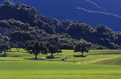 Upper Ojai hayfield