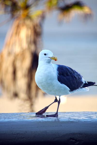Oxnard California, Sea Gull on Wall