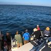 Santa Cruz Island, Channel Islands,  Sea Birds and Seals from Island Adventure Cruise