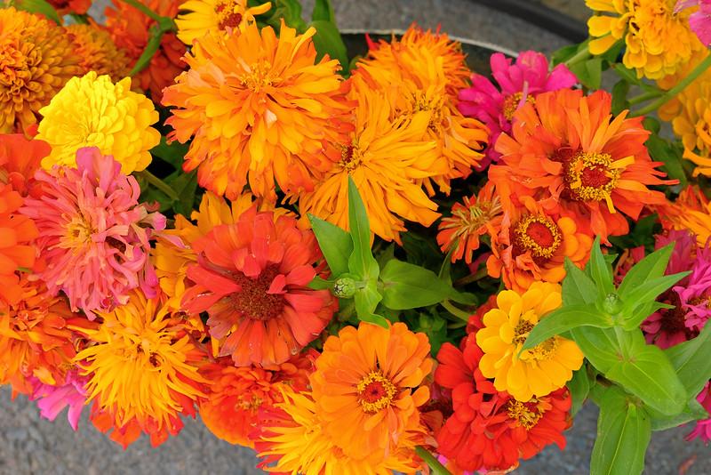 Petaluma Eastside Farmers Market, yellows, oranges and reds