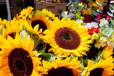 Sunflowers , sunny day