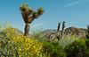 The Living Desert Museum in Palm Desert, California, USA.