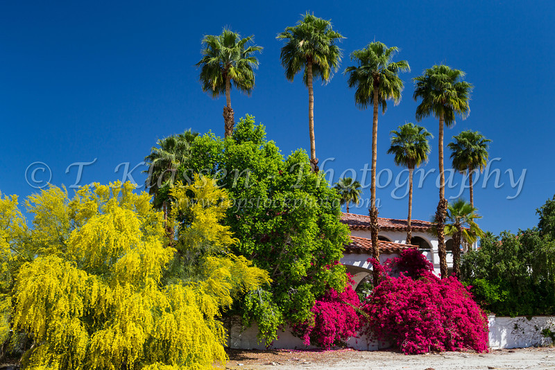 Palm springs best western las brisas hotel topstockphoto desert bougainvillea flowers and the yellow palo verde tree with palms at the las brisas hotel mightylinksfo Images