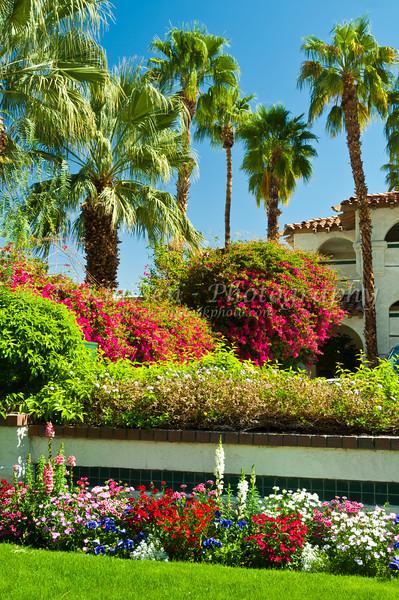 Palm springs best western las brisas hotel topstockphoto bougainvillea flowers and spanish architecture at the las brisas best western resort in palm springs mightylinksfo