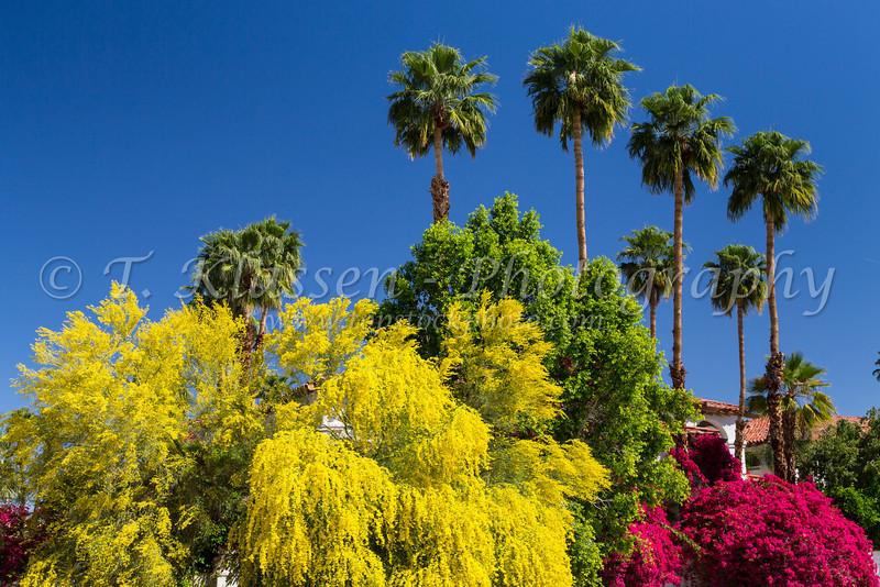 Palm Springs Best Western Las Brisas Hotel Topstockphoto