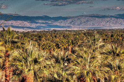 coachella-valley-palm-trees-2-15