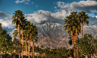 mountains-snow-palm-trees-4