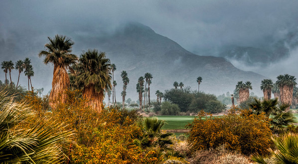 foggy-palm-trees-2
