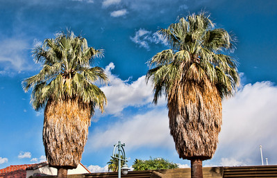 palm-trees-2
