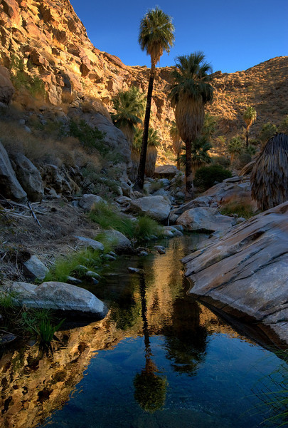 Murray Canyon, Palm Springs